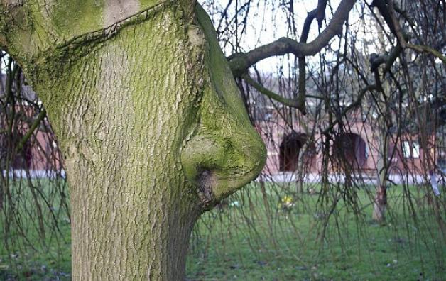 дерево с носом