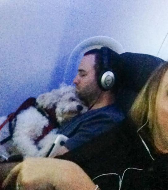 собака спит на руках