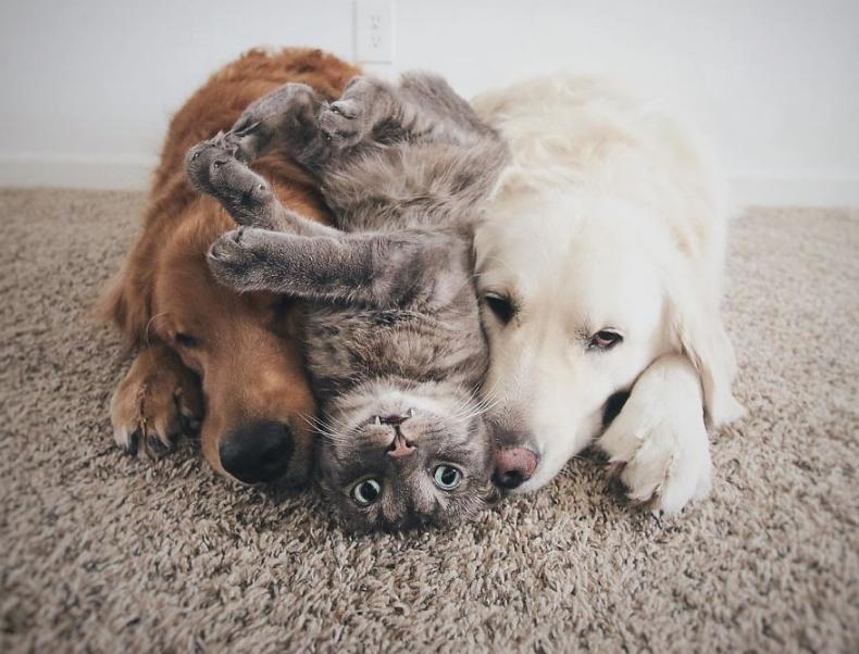 фото двух собак и кота