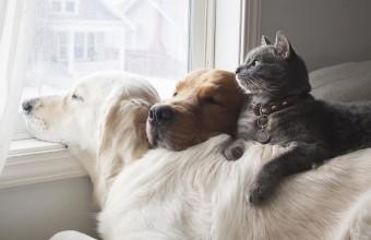 кот, собаки и окно