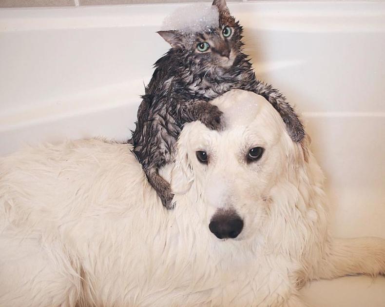 собака и кот в ванной