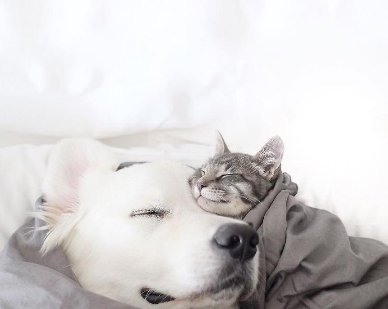 кот и собак милота