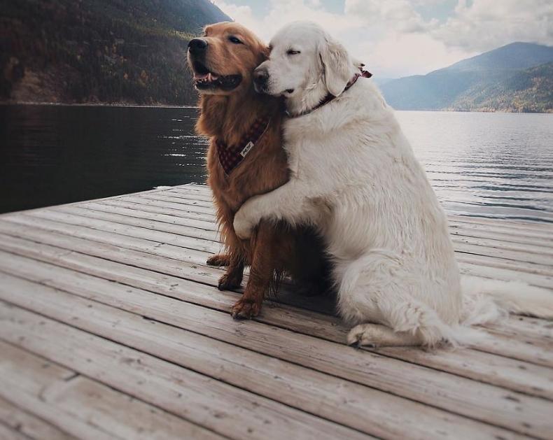 пес обнимает пса