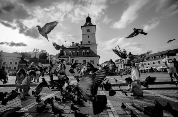 голуби на площади в Румынии