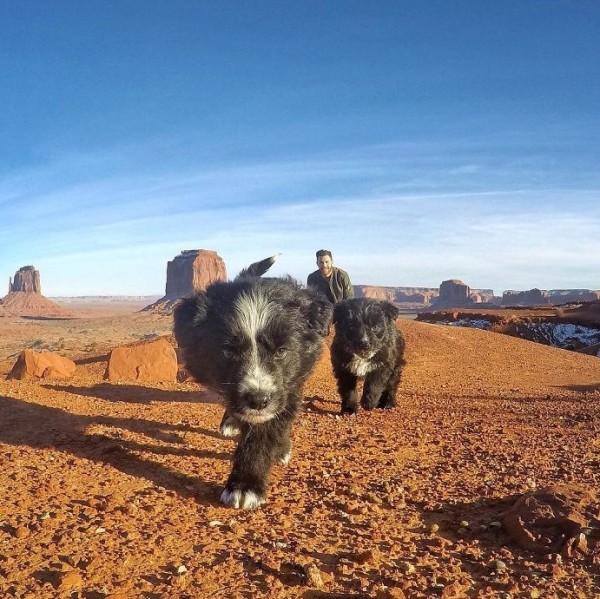 два щенка фото