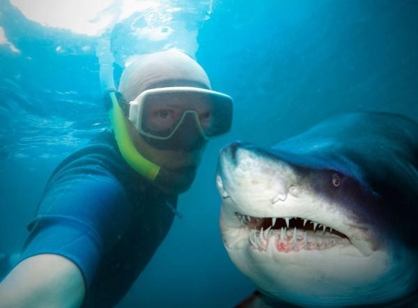 селфи с акулой