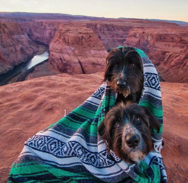 собаки под одеялом