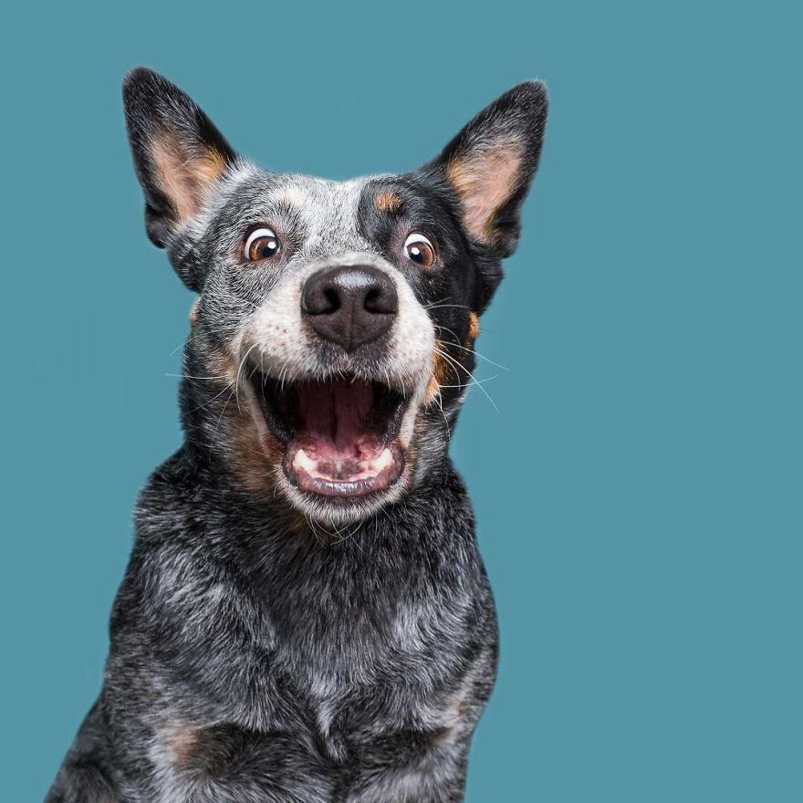 фото веселой собаки