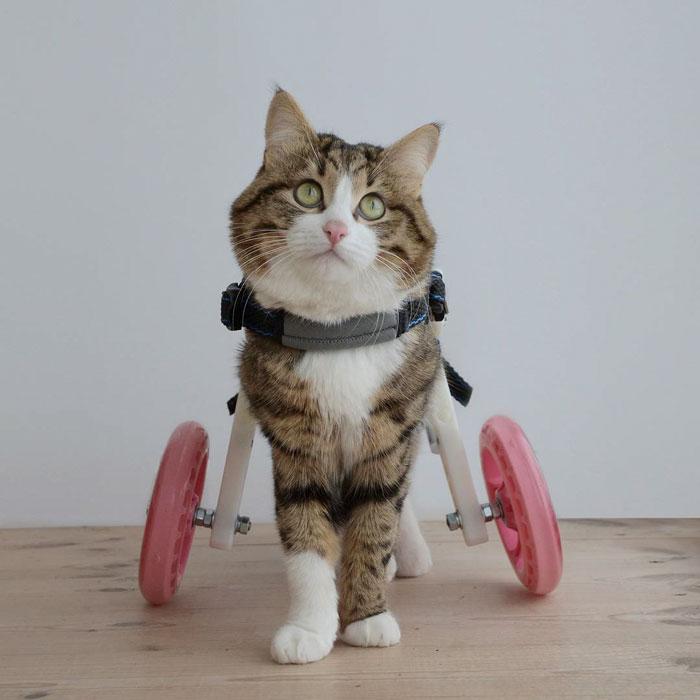 кот инвалид