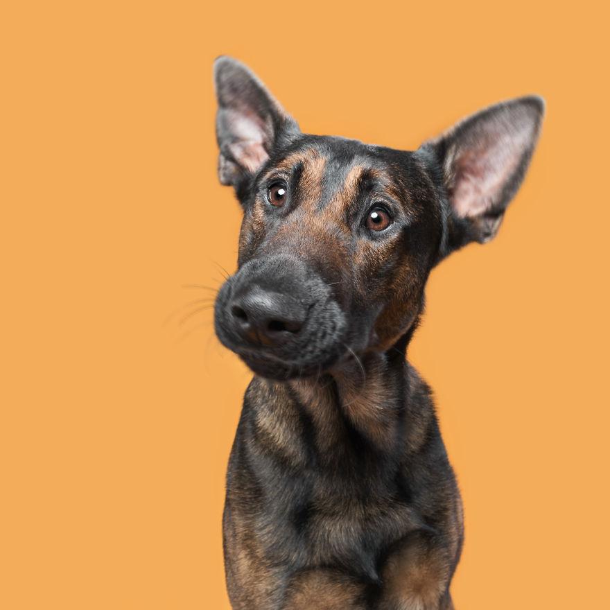 сконфуженный пес фото