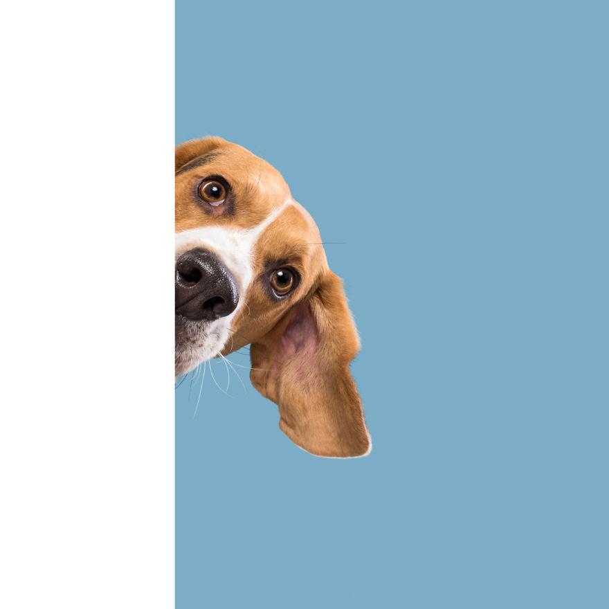 подглядывающий пес фото