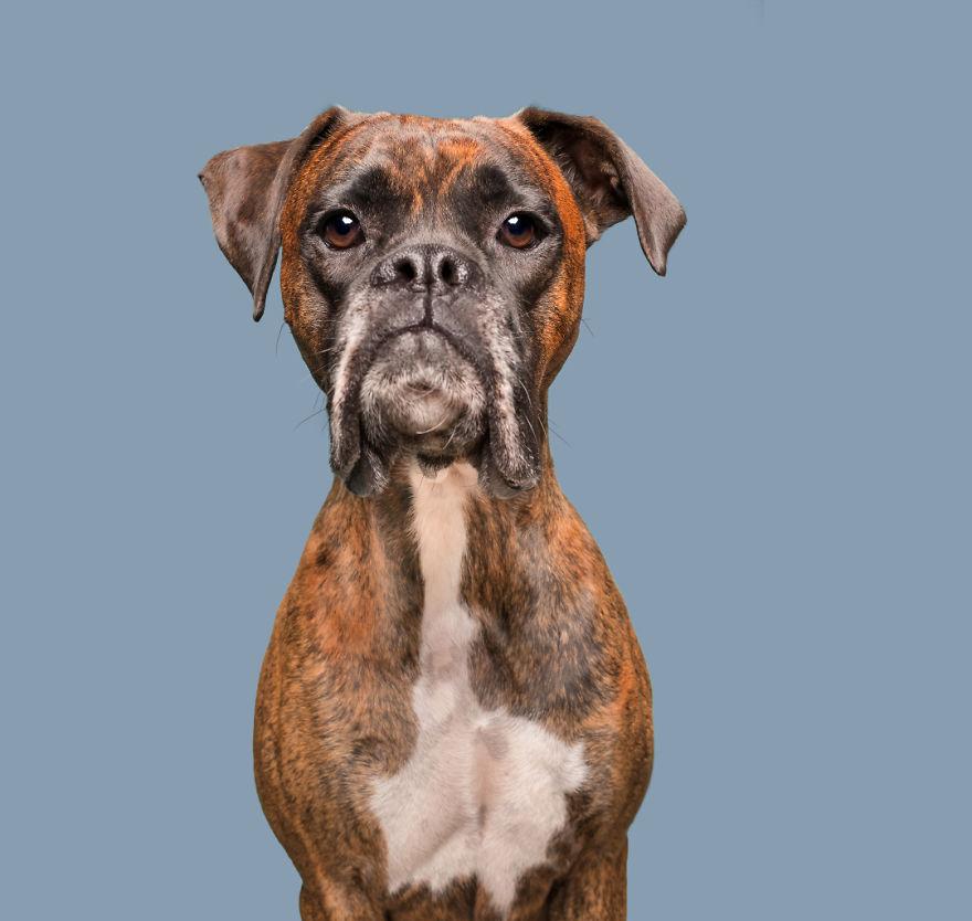 печальный пес фото