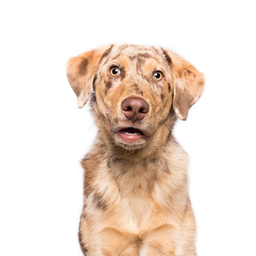 удивленный пес фотография