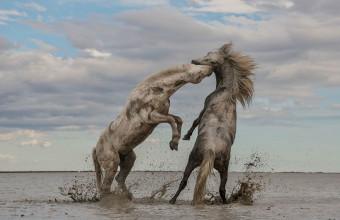 красивое фото лошадей