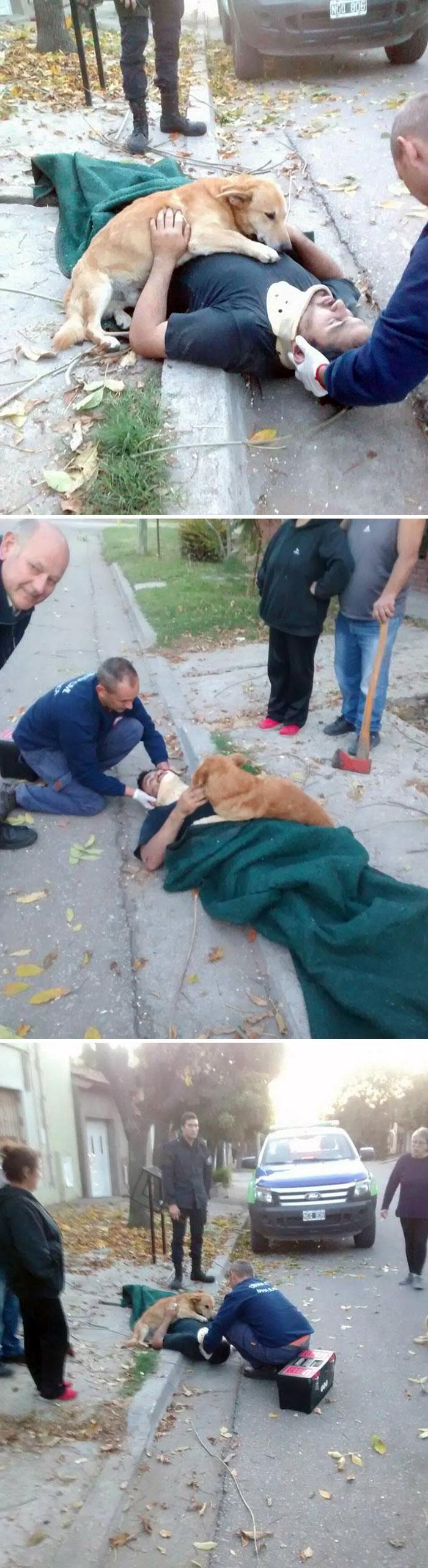 пес обнимает хозяина
