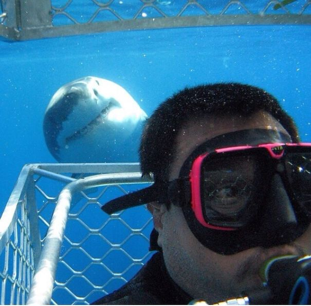 акула позади аквалангиста
