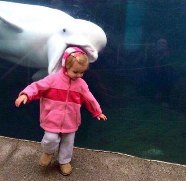 дельфин и девочка