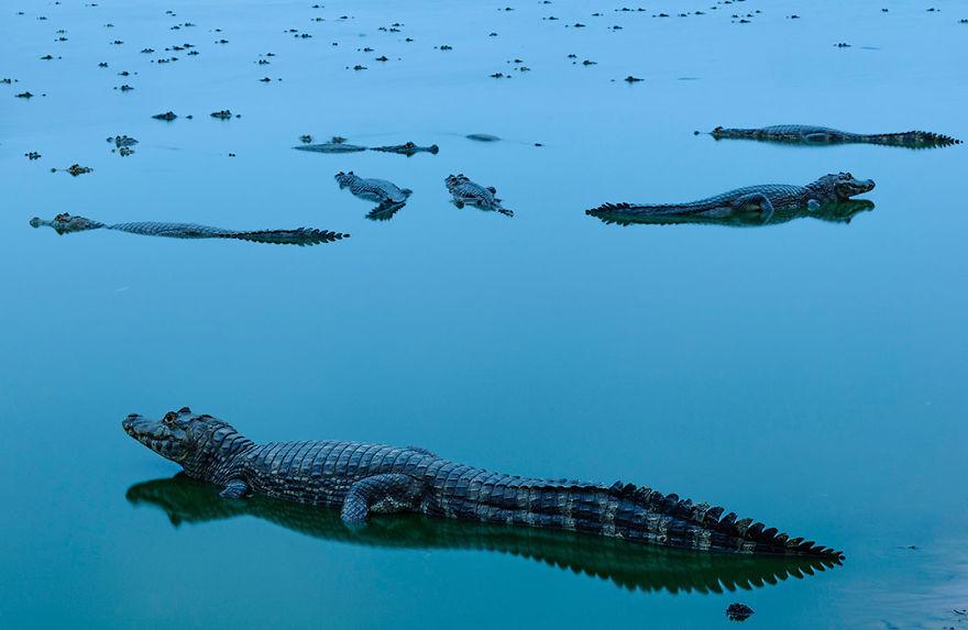 красивые фото крокодилов