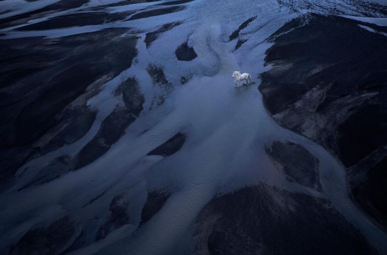 фото исландских лошадей