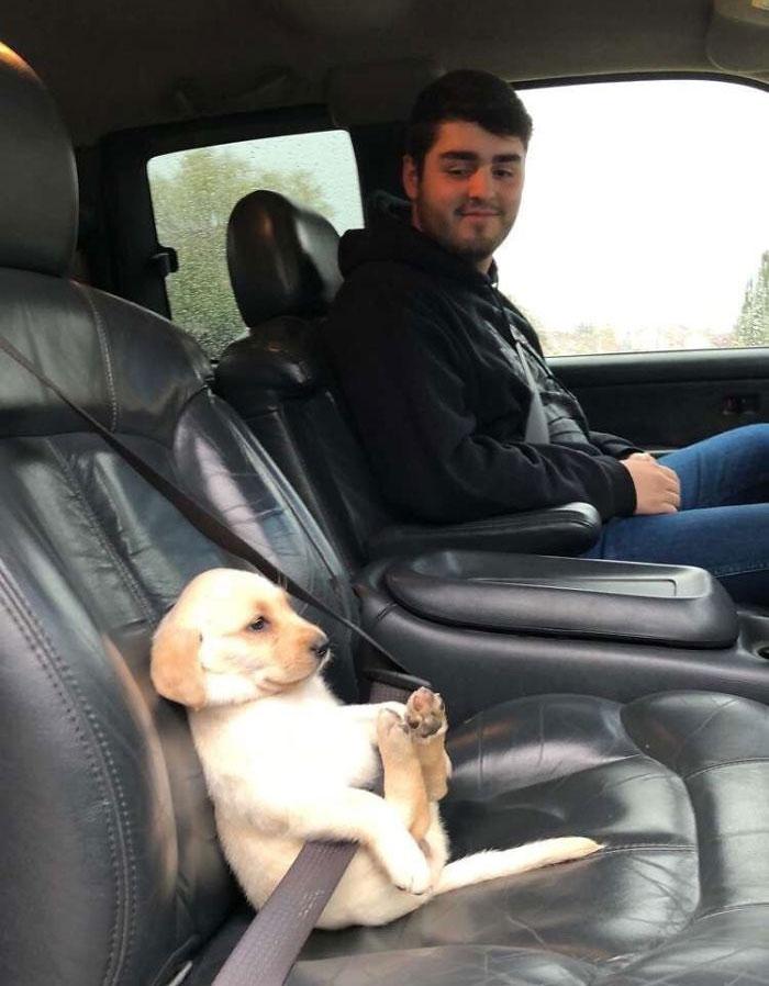 ремень безопасности для щенка
