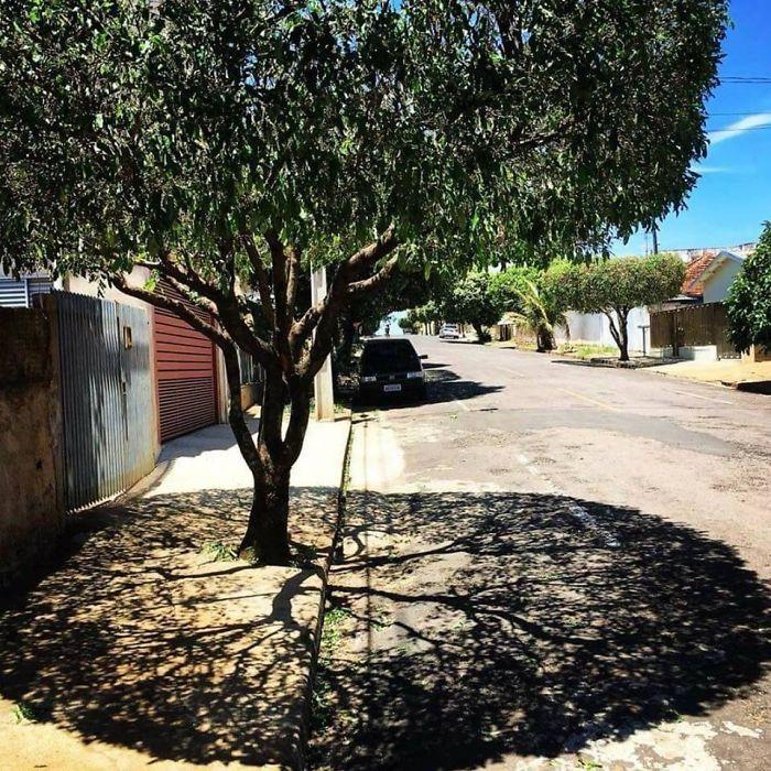 необычная тень от дерева