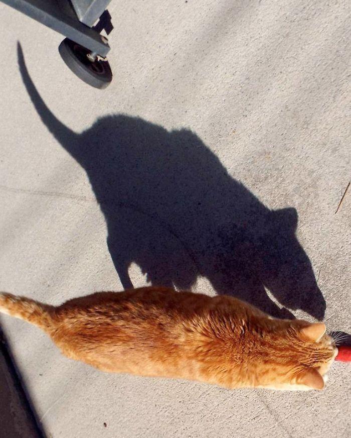 необычная тень от кота
