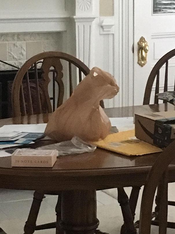 пакет похож на кота