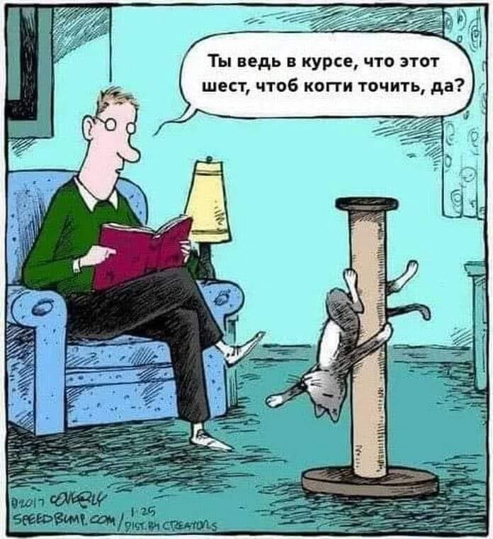 шутка про кота