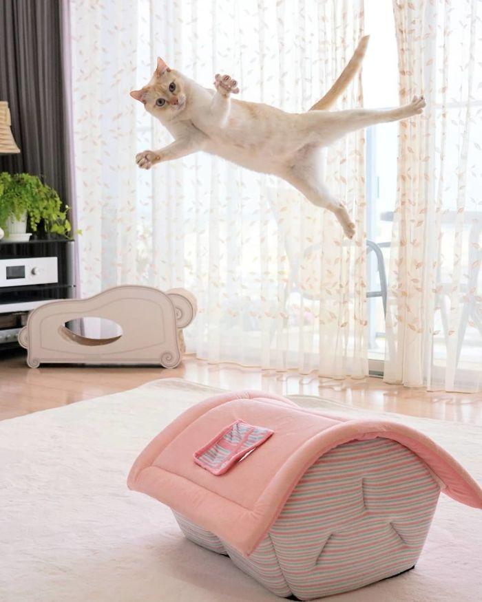 кот пролетает над домиком