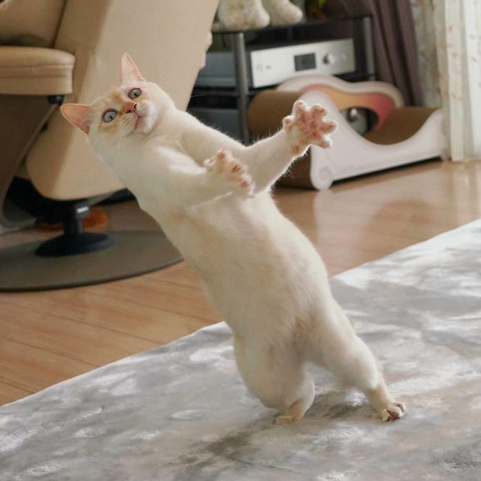 кот вратарь фото