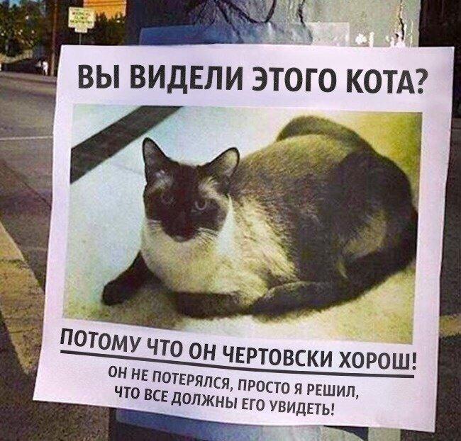 кот не потерялся