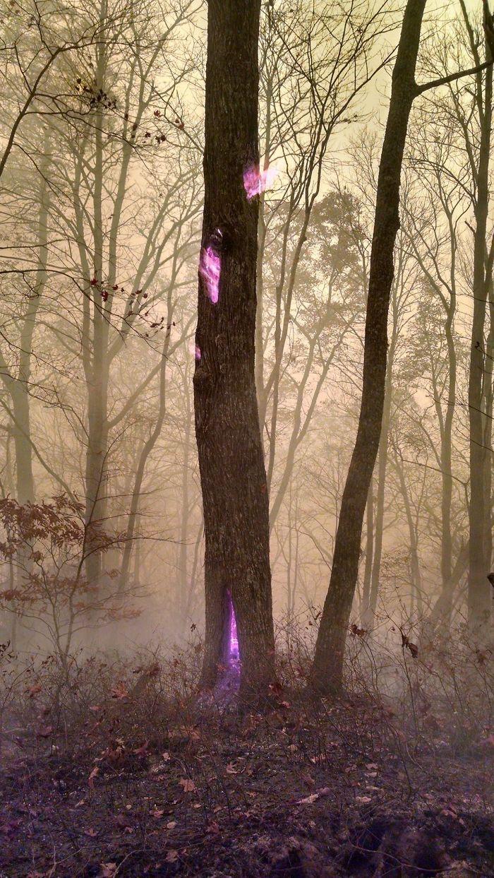 необычно горящее дерево