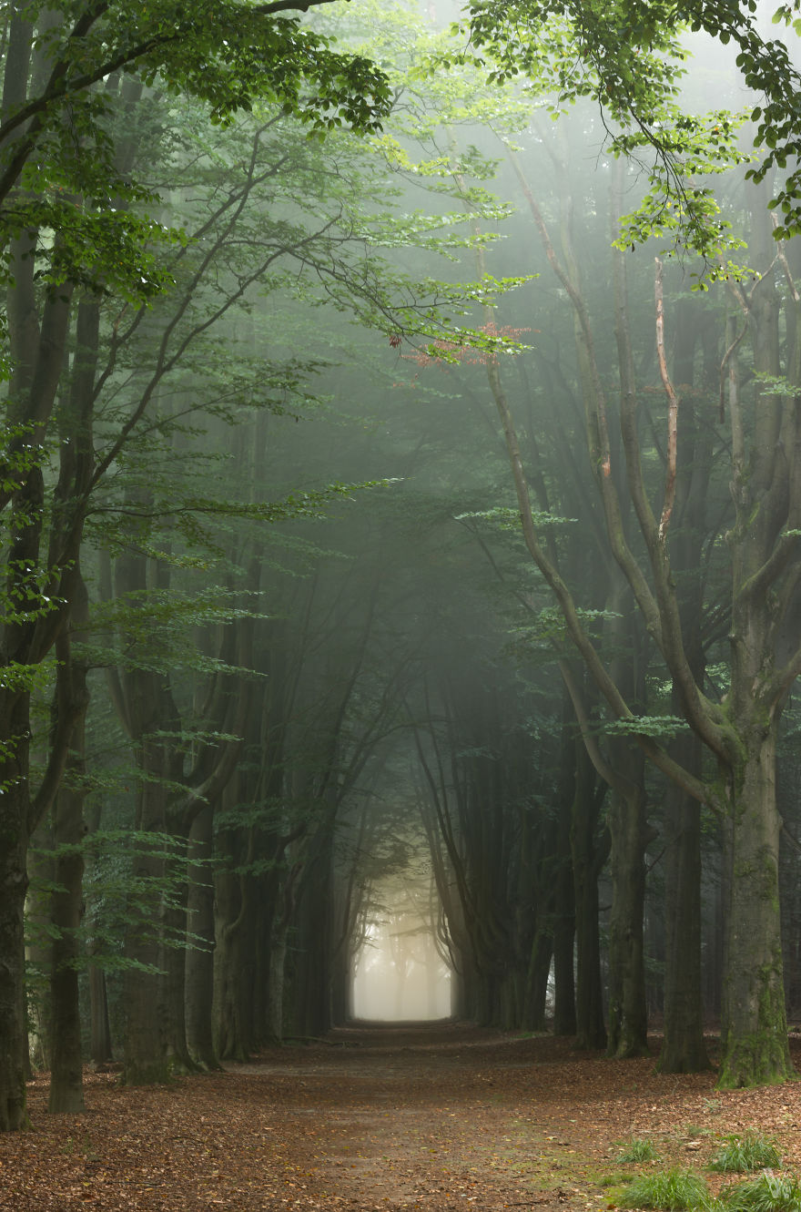 фотографии природы Нидерландов