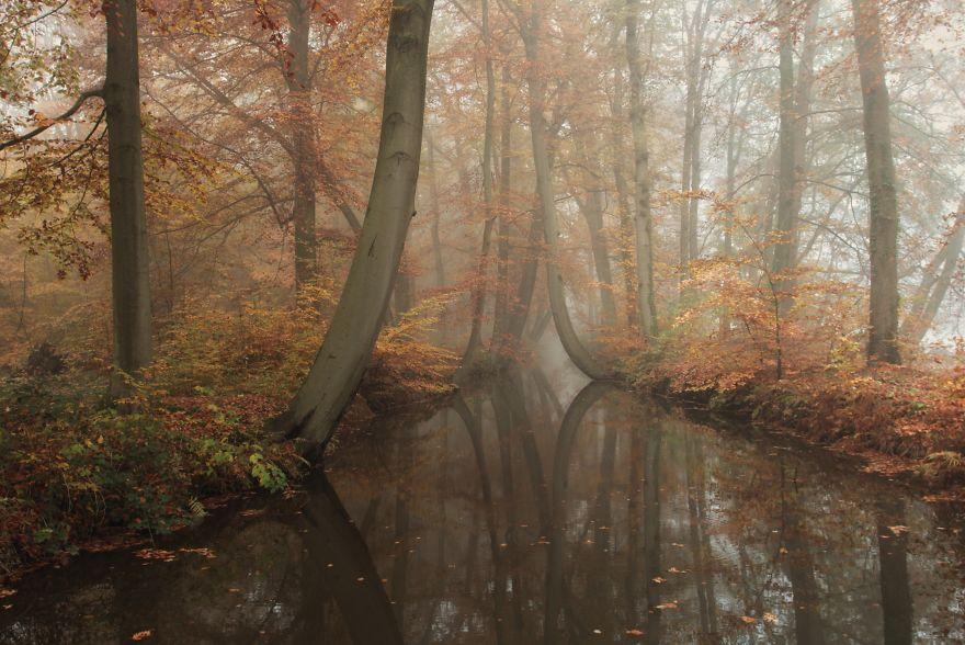 фотки природы Голландии