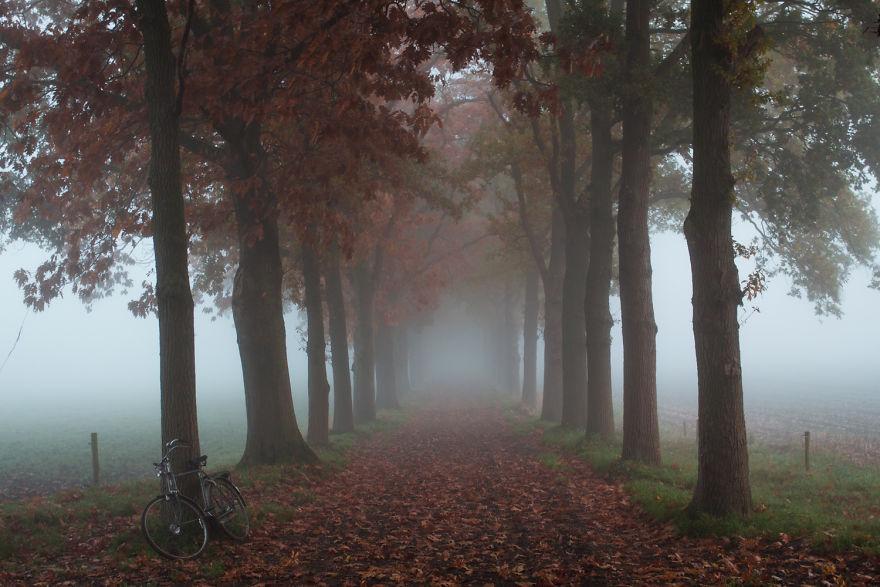 фотка природы Голландии
