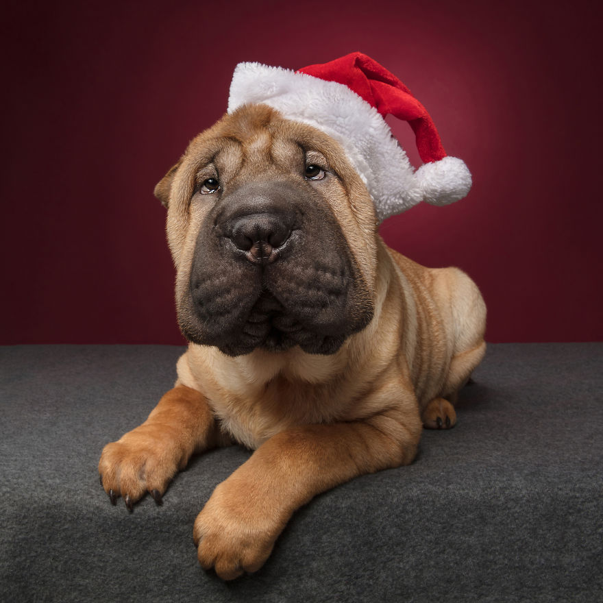 пес и новый год