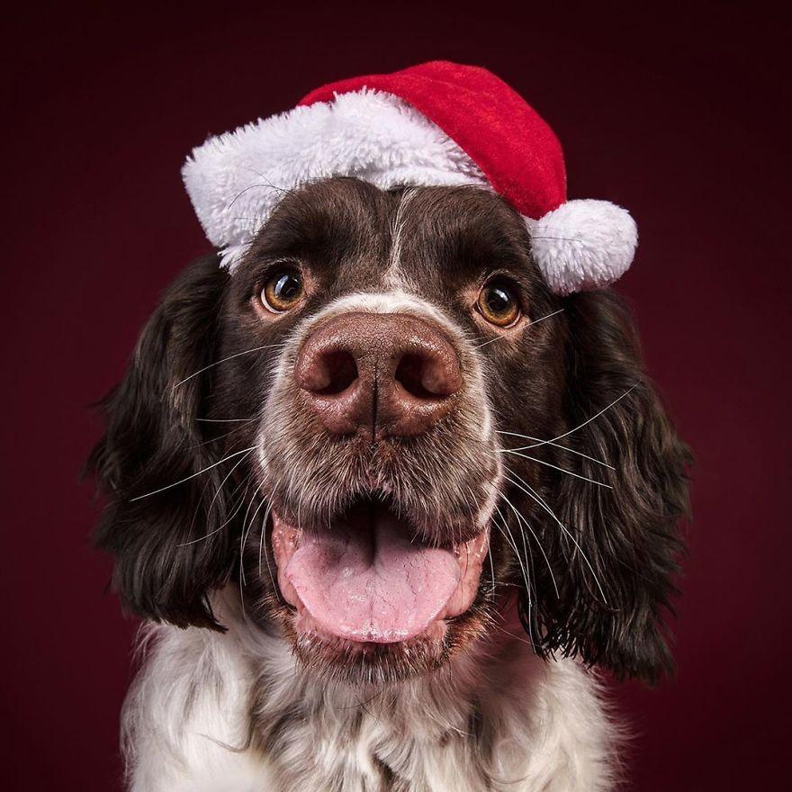 новогоднее фото собак