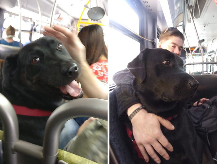 собака из Сиэтла