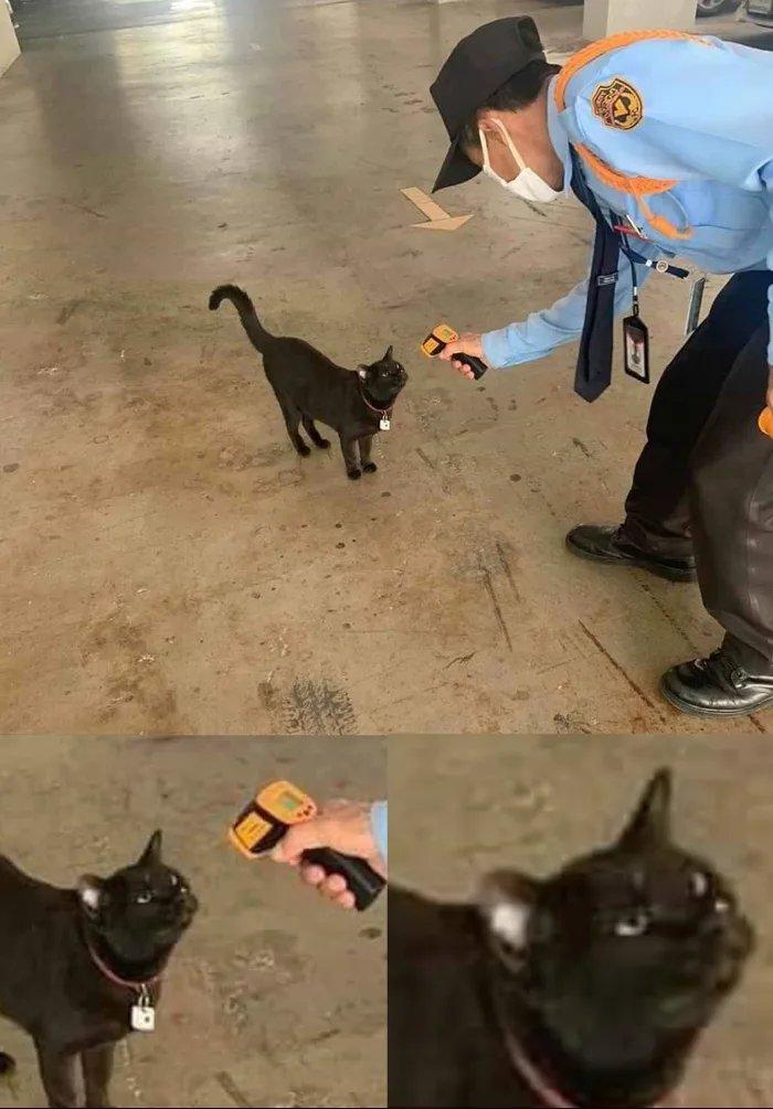 кот и коронавирус