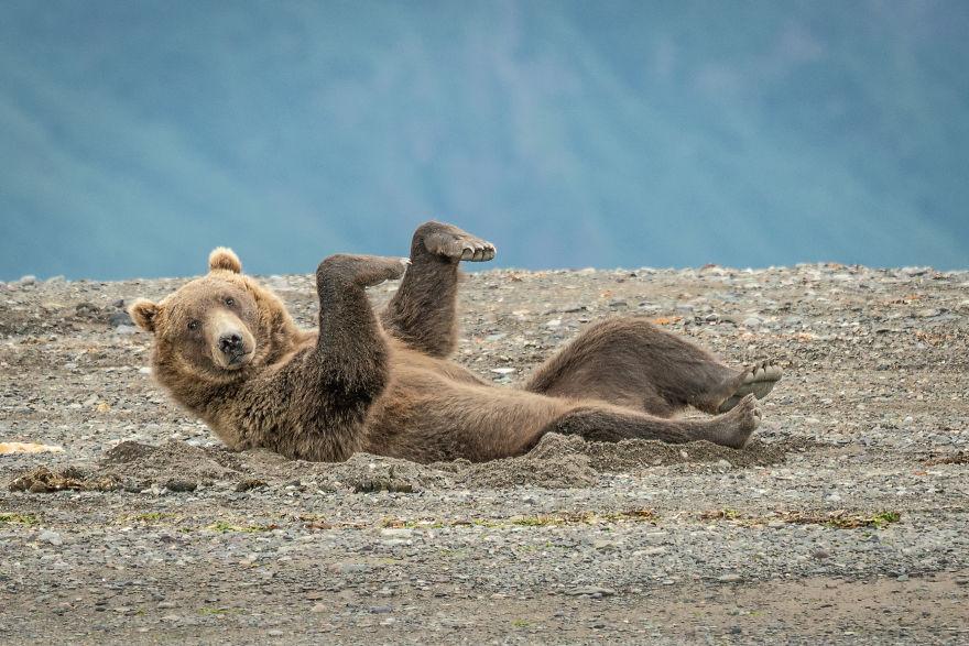 медведь в смешной позе