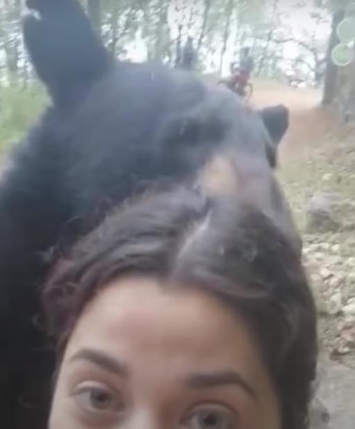 опасное селфи с медведем