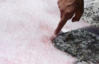 фото розового снега