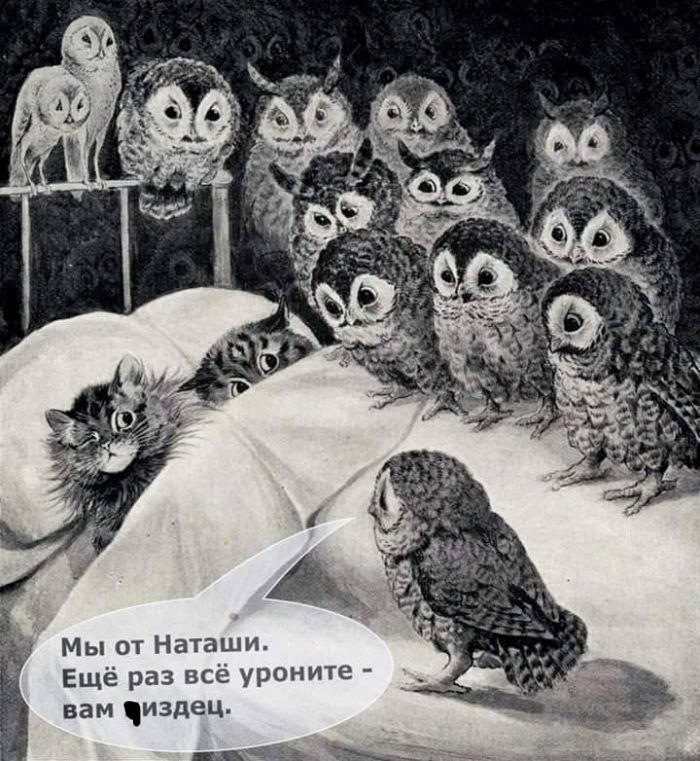 ответ Наташи котам