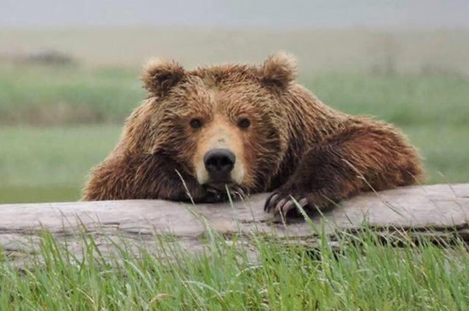 скучающий медведь фото