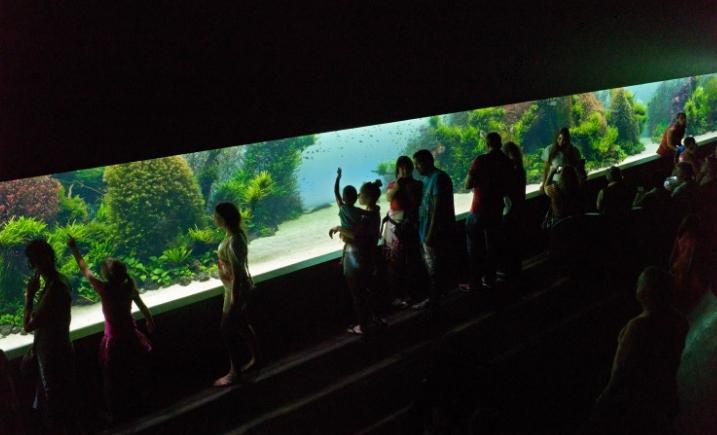 лиссабонский океанариум фото