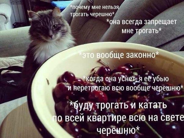 мечты котов шутки