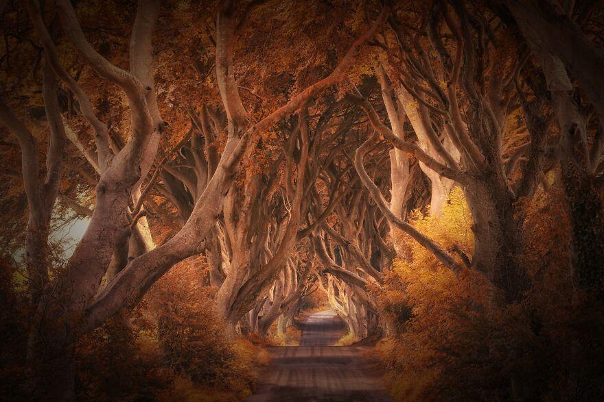 аллея из игры престолов