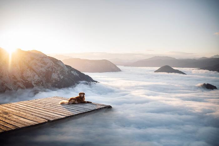 фото собаки в горах