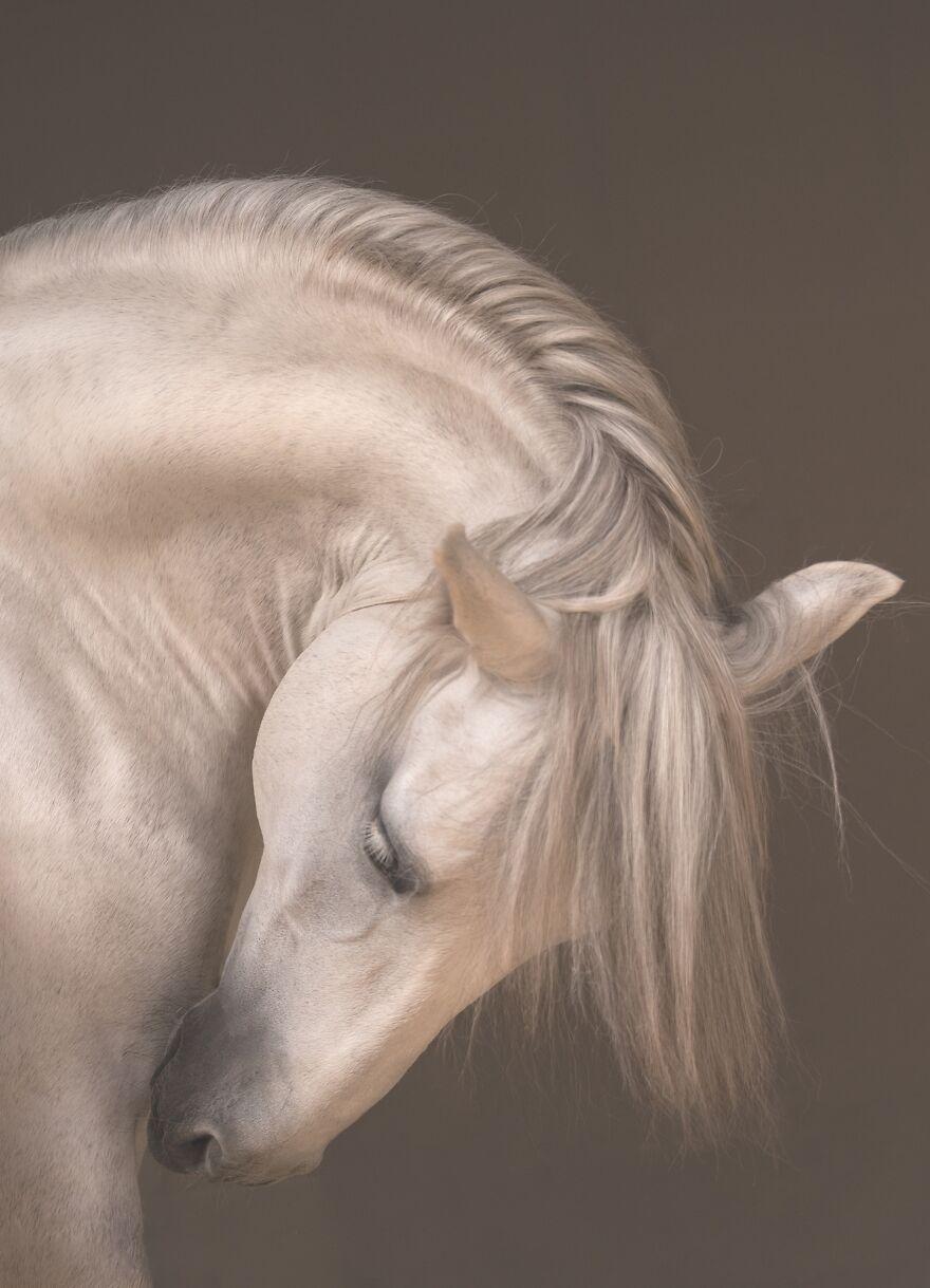 красивое фото белой лошади