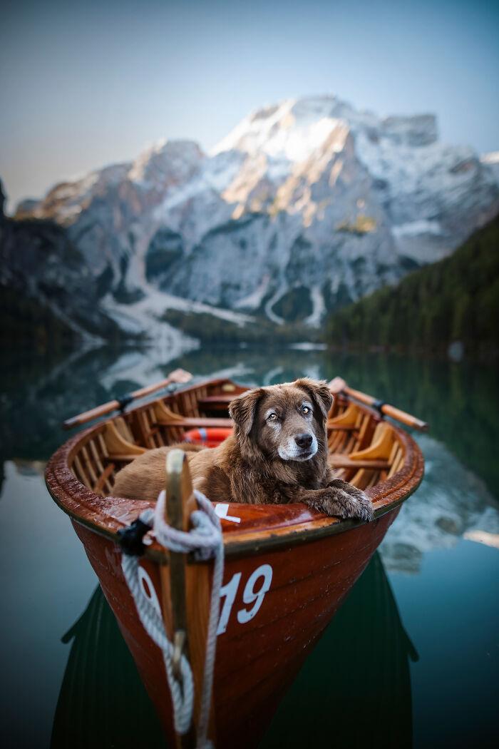 пес в лодке